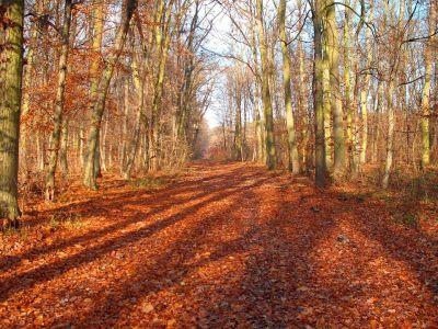 Vörös tölgyes erdő
